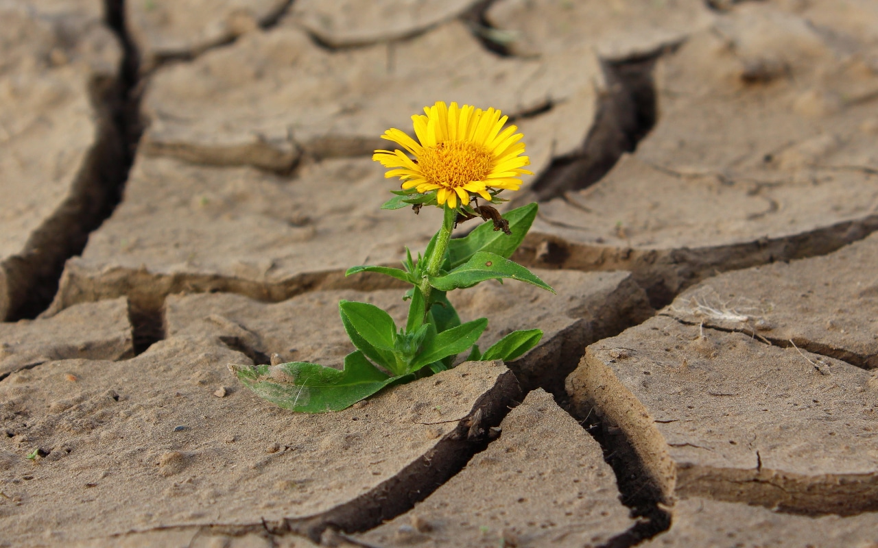 Self-advocacy skills for adults with disabilities or chronic illness. Yellow flower growing from crack in the sidewalk.